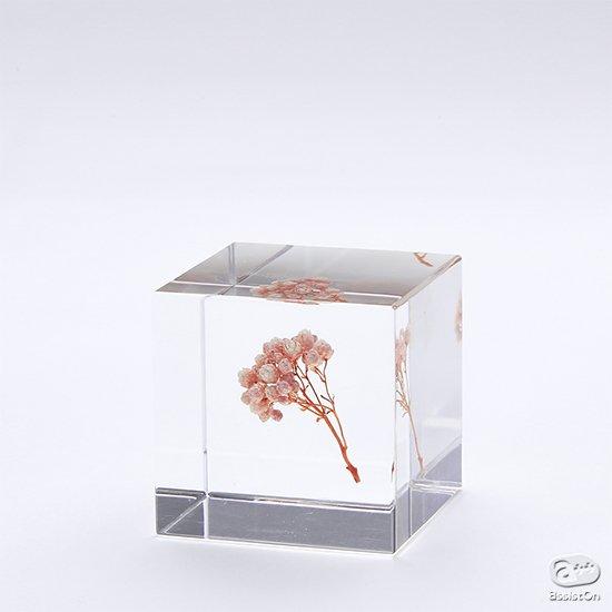 ライスフラワーや月桃など新作Cubeが仲間入り。全20種類のコレクションに。植物のかたちの不思議を、4センチの透明なキューブにとじこめました。