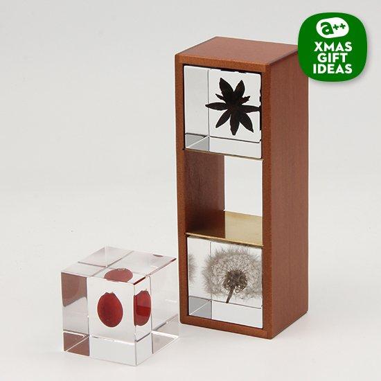 この冬、40個だけの限定セットです。植物のかたちの不思議を、透明なキューブにとじこめた「Sola cube」。その中でも人気のアイテムを選んで木箱に入れて、ホリデーシーズンのセットをつくりました。
