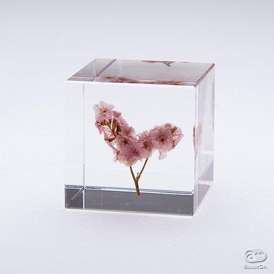 サマーチェリーやユーカリなど新作Cubeが仲間入り。全25種類のコレクションに。植物のかたちの不思議を、4センチの透明なキューブにとじこめました。